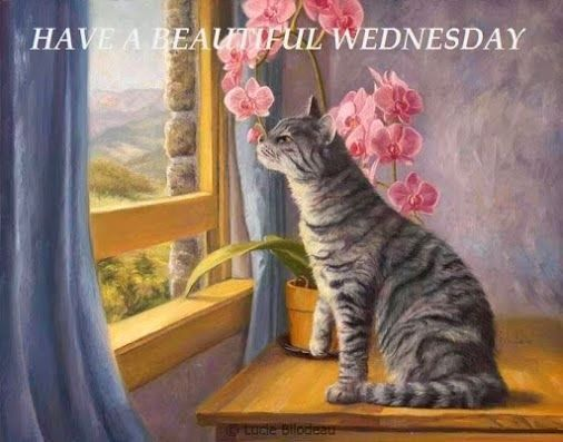 Have a Beautiful Wednesday