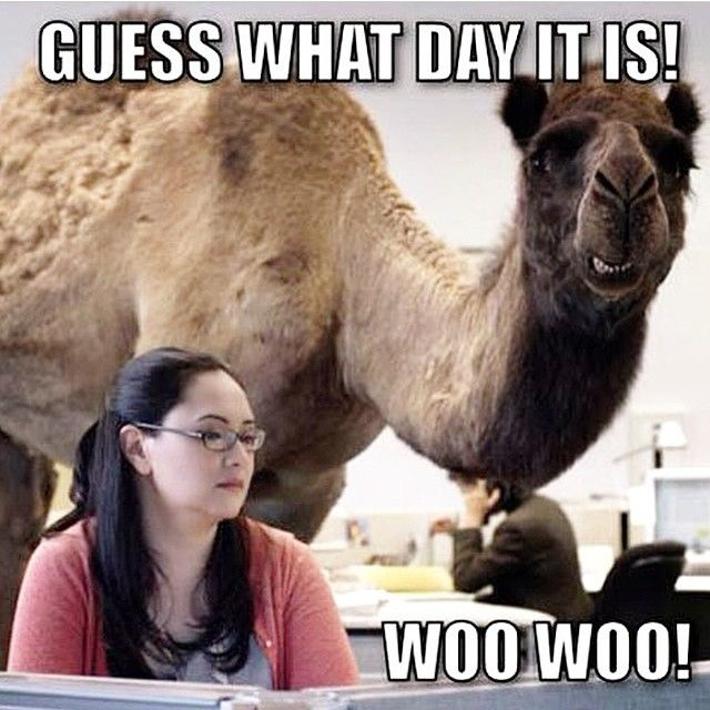 Happy Thanksgiving Meme >> Guess What Day It Is Pictures, Photos, and Images for Facebook, Tumblr, Pinterest, and Twitter
