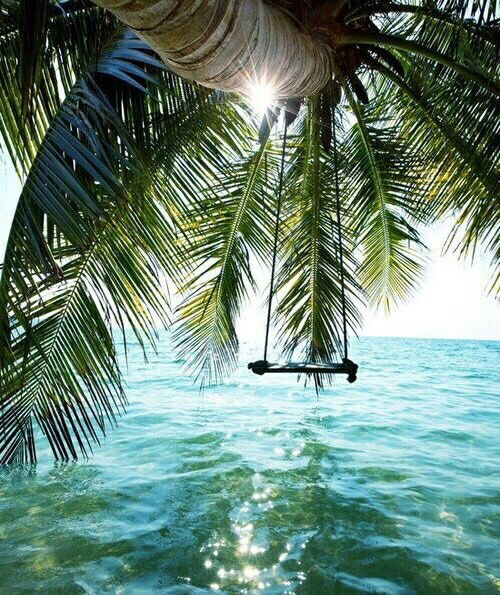 Palm Tree Swing Pictures, Photos, And Images For Facebook