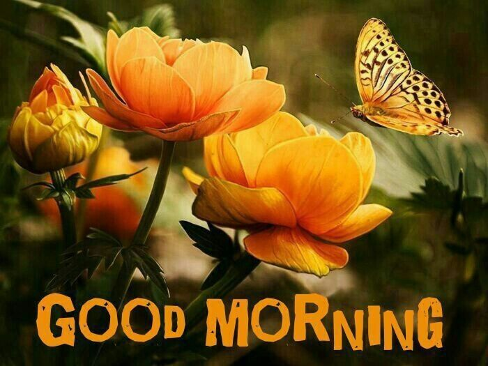 Good Morning Flowers Pictures, Photos, and Images for Facebook, Tumblr ...