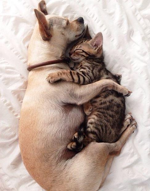 Lets Snuggle