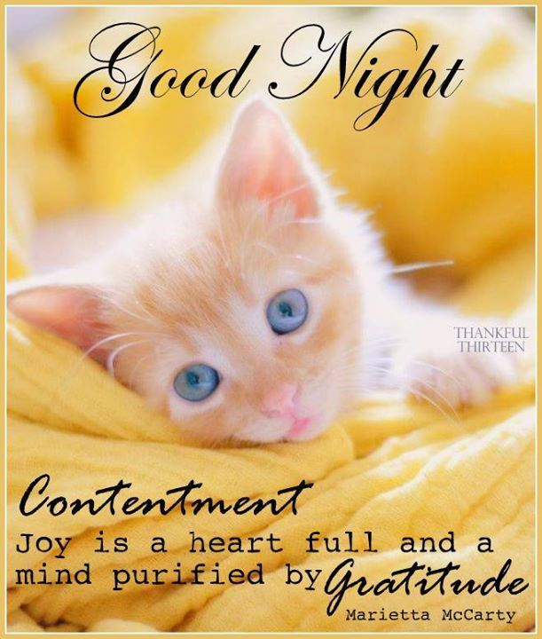 Good Night Gratitude