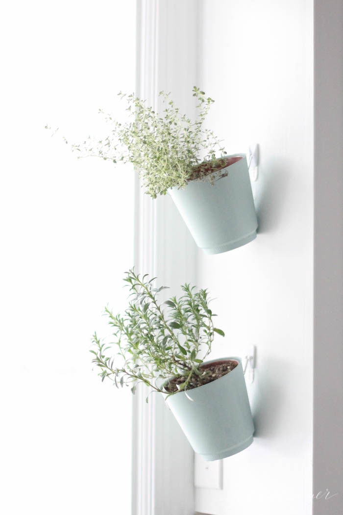 Indoor Hanging Planters Pictures Photos And Images For