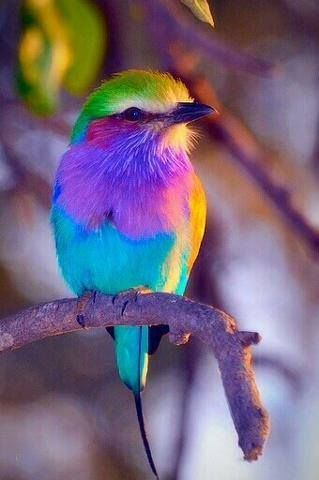Colorful Bird Pictures, Photos, and Images for Facebook