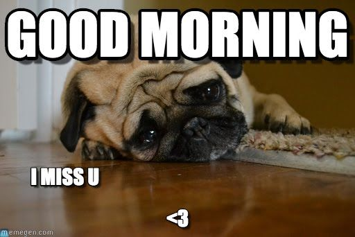 Good Morning I Miss You Pictures, Photos, and Images for