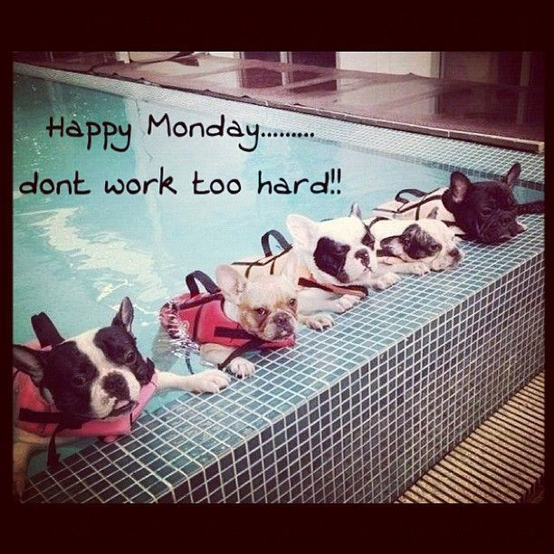 Happy Monday Dont Work Too Hard