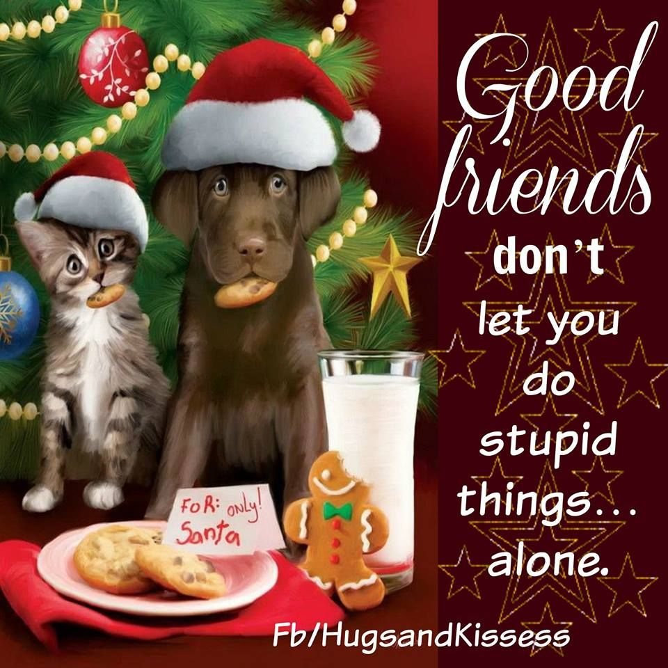 Cute Christmas Quotes Tumblr Daily Inspiration Quotes