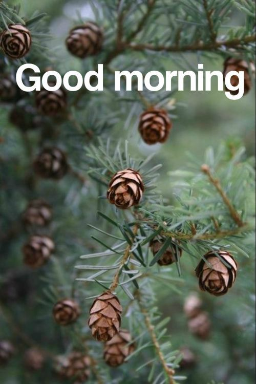 Good Morning Nature Image Pictures Photos And Images For