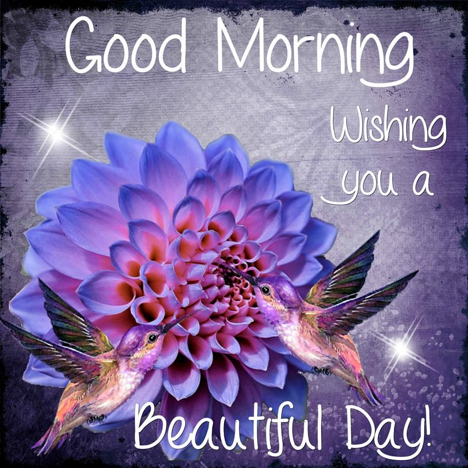 Good Morning Beautiful People Quotes: Good Morning Wishing You A Beautiful Day Quote Pictures
