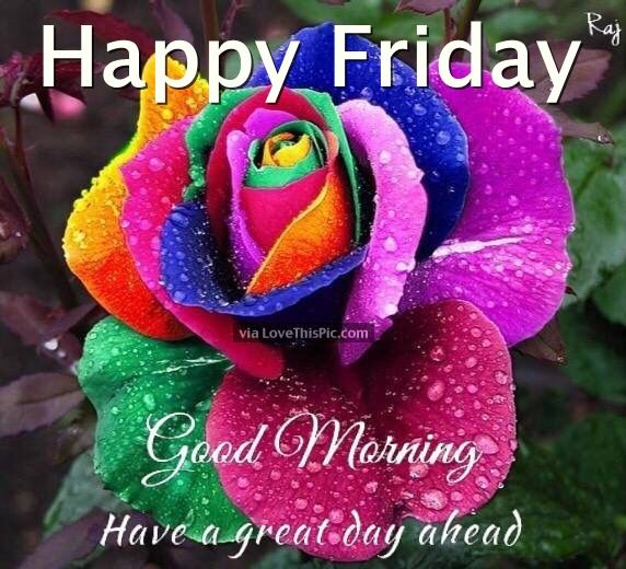 Happy Friday Comments: Happy Friday Good Morning Have A Great Day Ahead Pictures