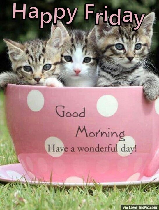 Good Morning Quotes Cat : Happy friday good morning quote with cats pictures photos