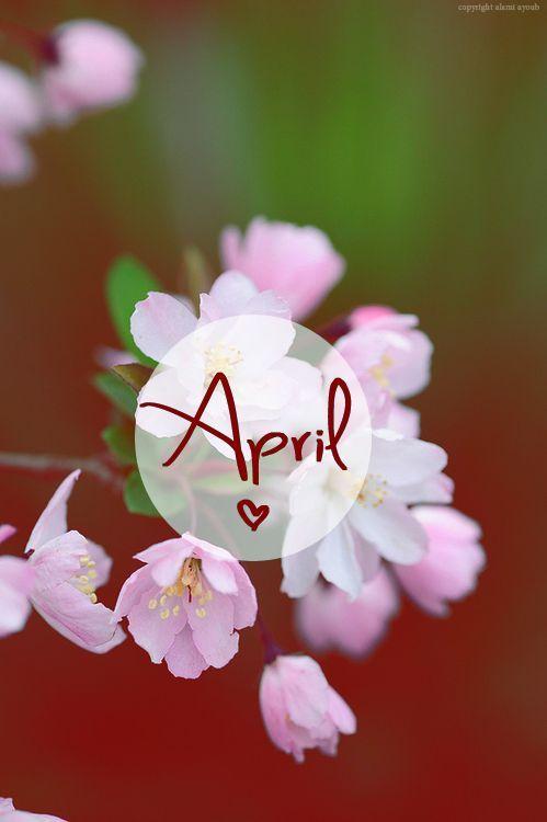 April Calendar Picture   Free Photograph   Photos Public