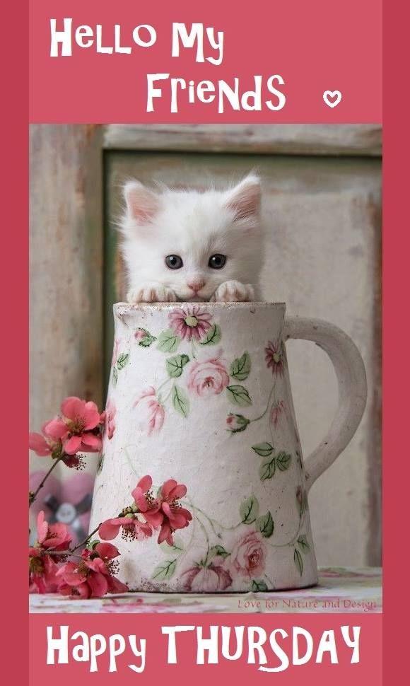 Hello My Friends, Happy Thursday