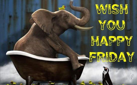 Wish You Happy Friday