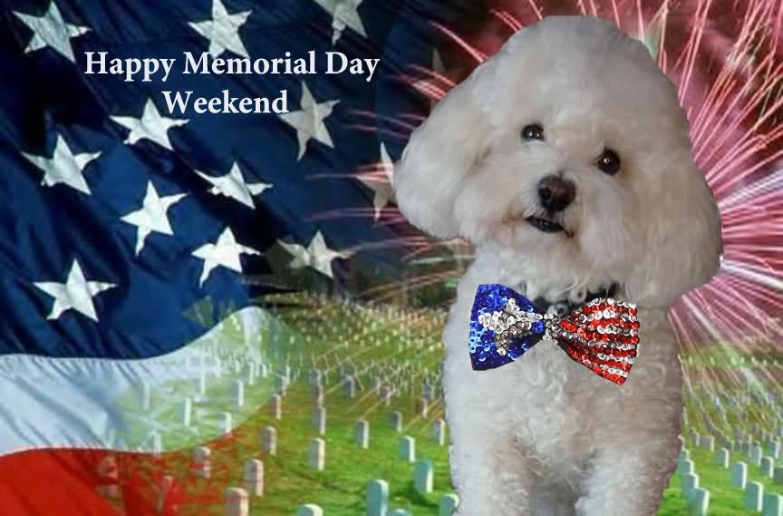 Happy Memorial Day Weekend Puppy