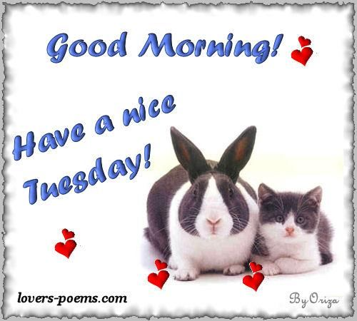Good Morning, Have A Nice Tuesday