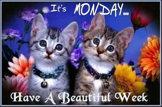Its Monday Have A Beautiful Week