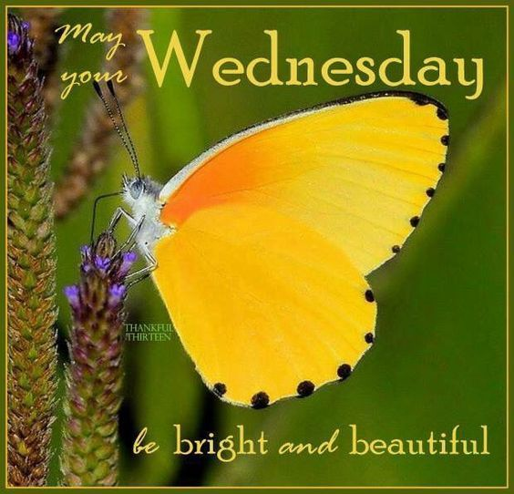 May Your Wednesday Be...