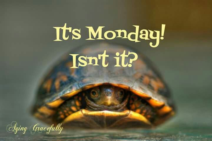 It's Monday! Isn't It?