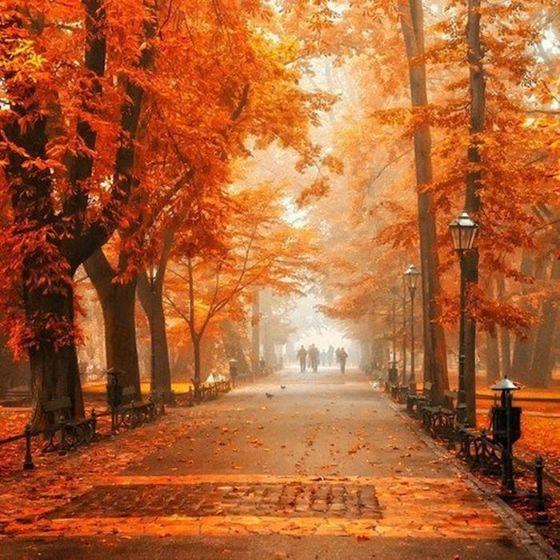 Beautiful Park During Autumn