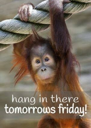 Hang In There, Tomorrows Friday!