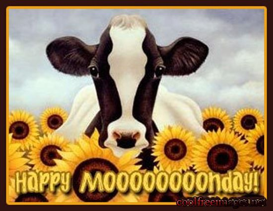 Happy Moooooonday!
