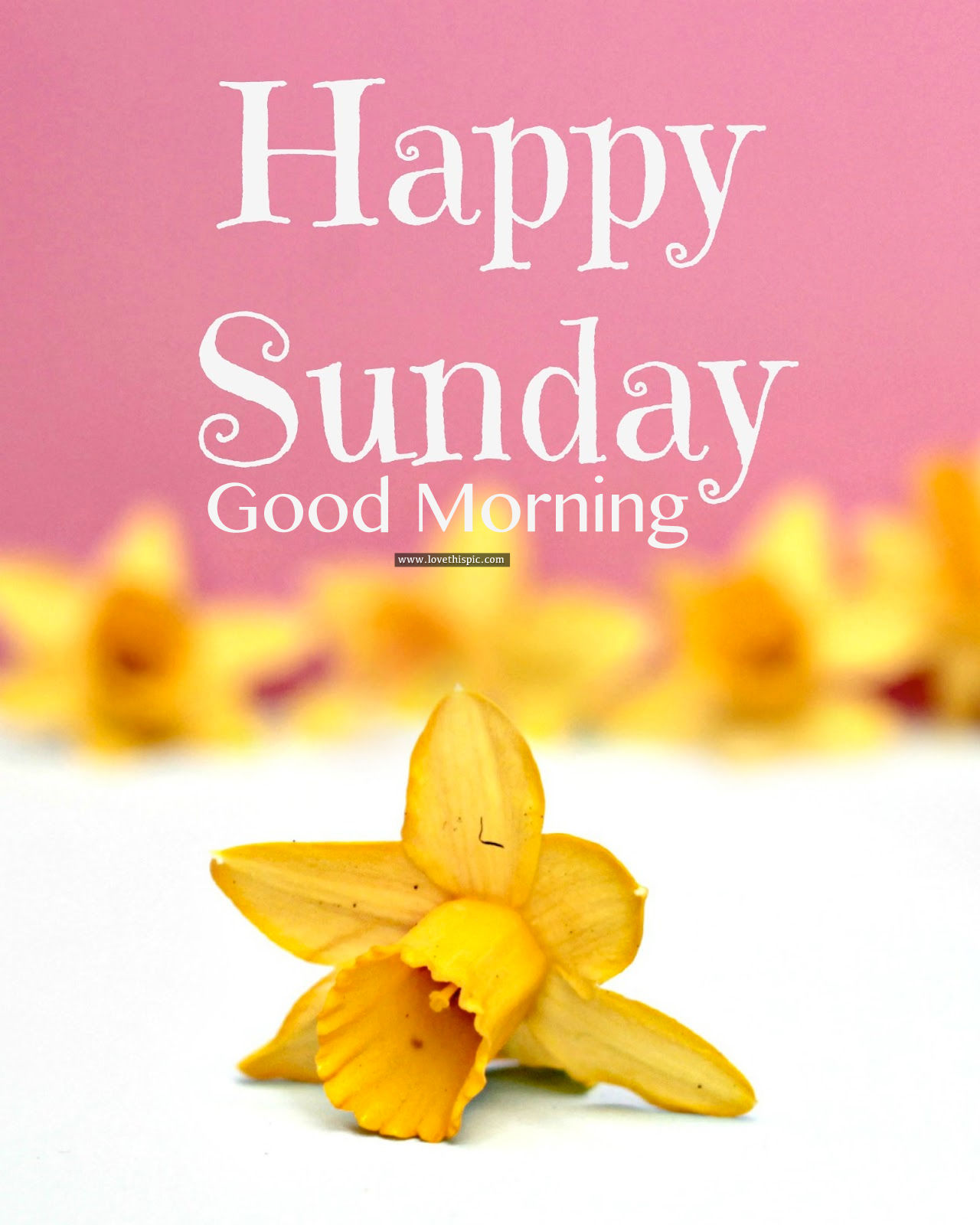 Good Morning And Happy Sunday Love Message : Happy sunday good morning pictures photos and images