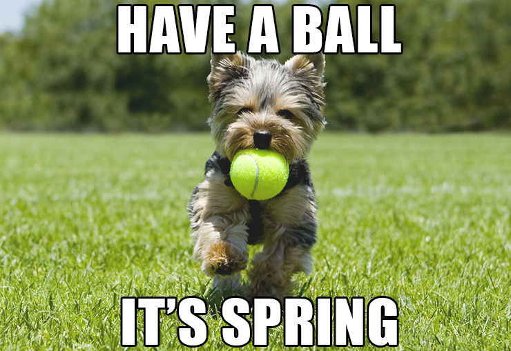 Have A Ball, It's Spring