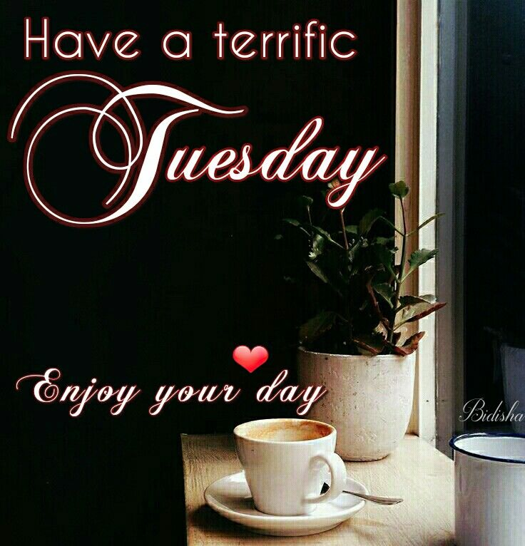 Good morning and happy tuesday pictures photos and images for - Have A Terrific Tuesday Enjoy Your Day Pictures Photos