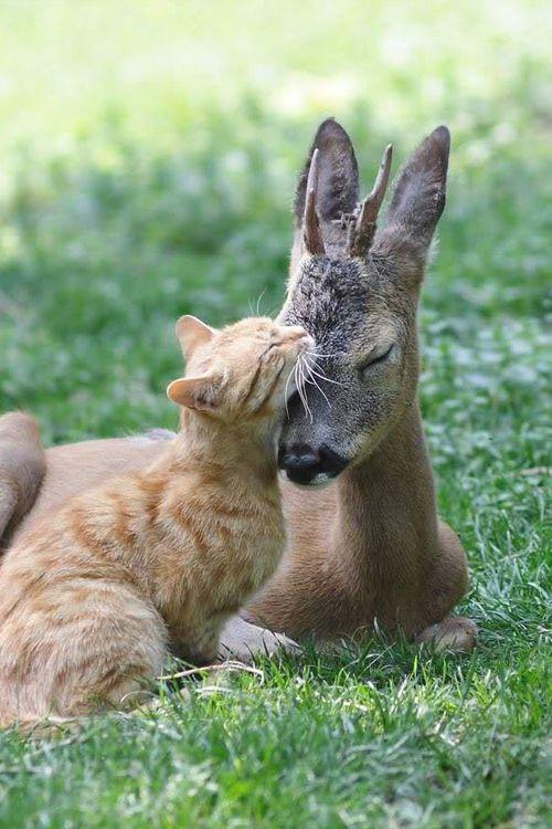 Animal pals