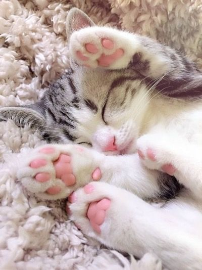 Cute kitten with pink paws