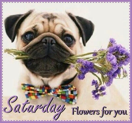 Saturday Flowers For You