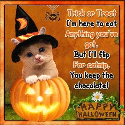 Trick Or Treat, I'm Here To Eat Anything You've Got But I'll Flip For Catnip, You Keep The Chocolate, Happy Halloween