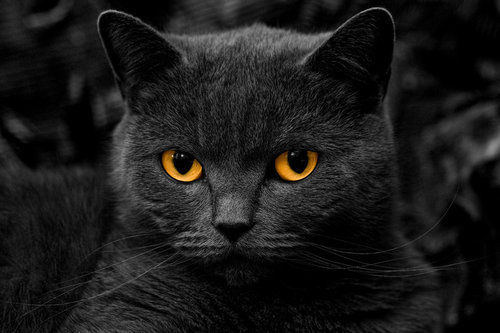 Black Cat With Orange Eyes Pictures Photos And Images