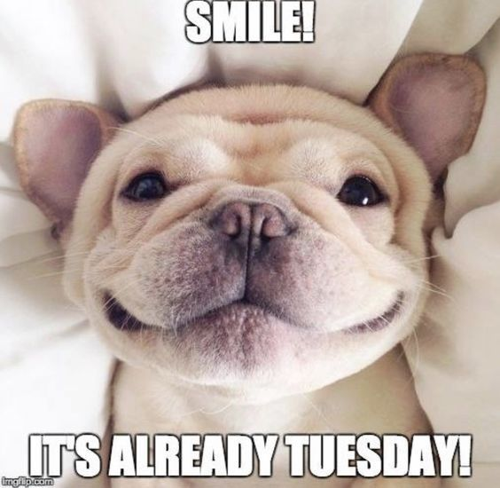 Smile! Its Already Tuesday