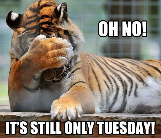 Oh No! It's Still Only Tuesday