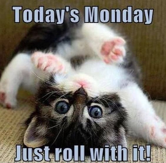 Today's Monday, Just roll with it!