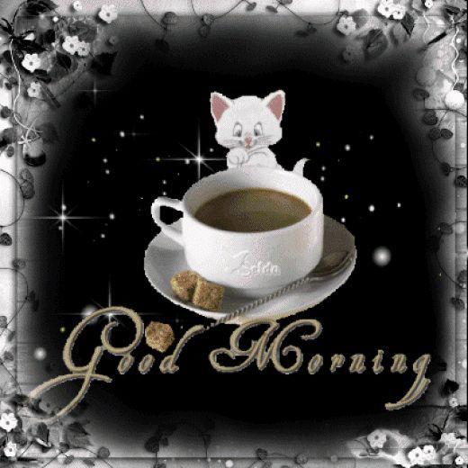 Good Morning Cats Gif