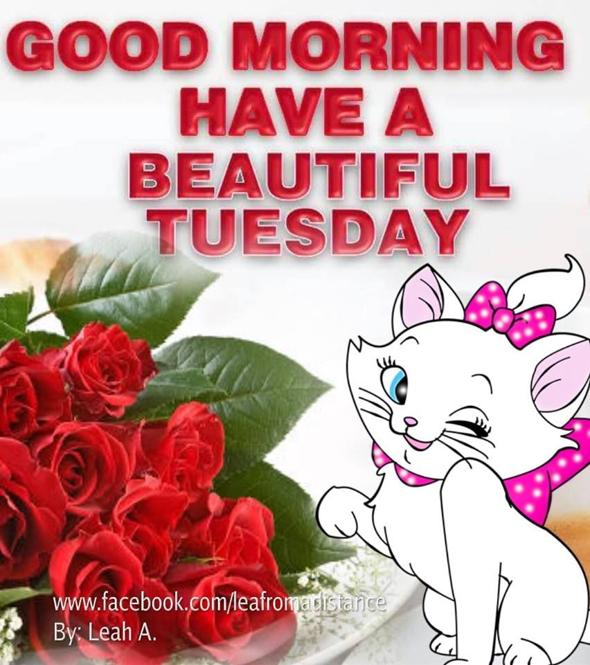 Cartoon Kitty Have A Beautiful Tuesday Good Morning