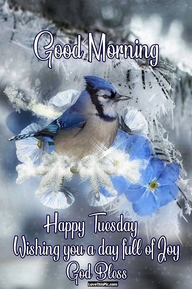 Happy Tuesday Peace And Joy Pictures, Photos, And Images