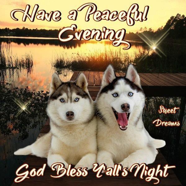 Husky Peaceful Evening