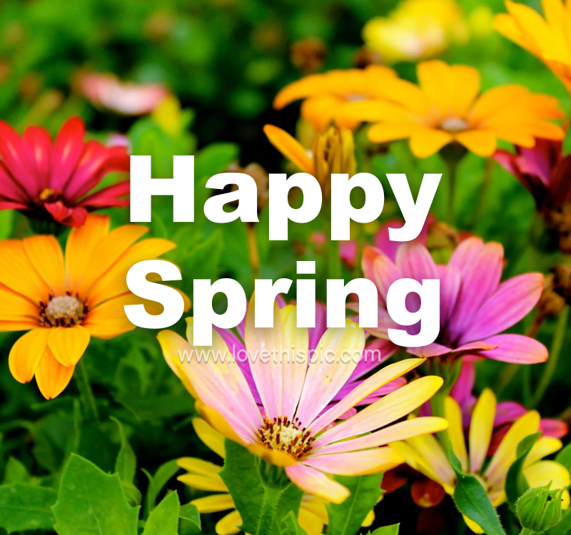 Assorted Flowers - Happy Spring Image Pictures, Photos ...