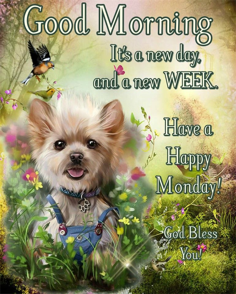 384612-A-New-Day-A-New-Week-Good-Morning-Happy-Monday.jpg