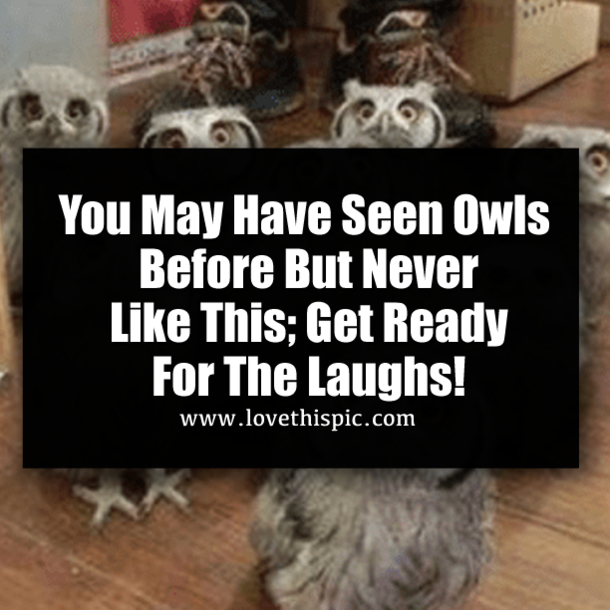 Inspirational Quotes About Failure: You May Have Seen Owls Before But Never Like This; Get