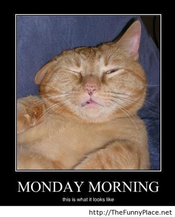 Funny Monday Morning Meme : Funny monday morning faces