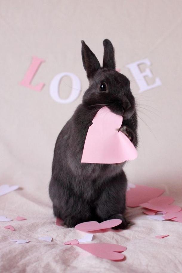 Pet Rabbit Birthday