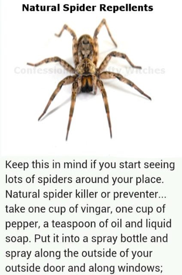 These Things And Never See Spider Your Home Again
