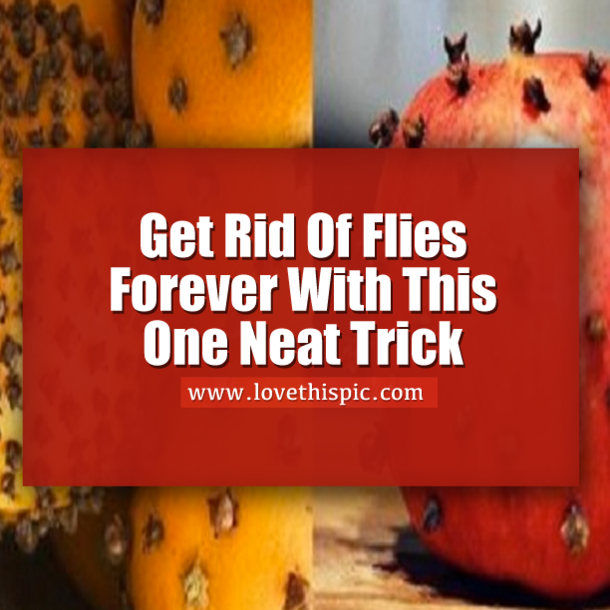 Get Rid Of Flies Forever With This One Simple Trick