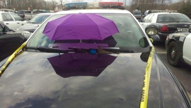 Картинки по запросу dove on police car