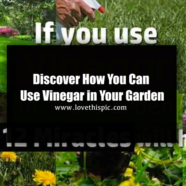 White Vinegar Is A Gardener S Best Friend Here Are 12 Clever Uses In The Garden